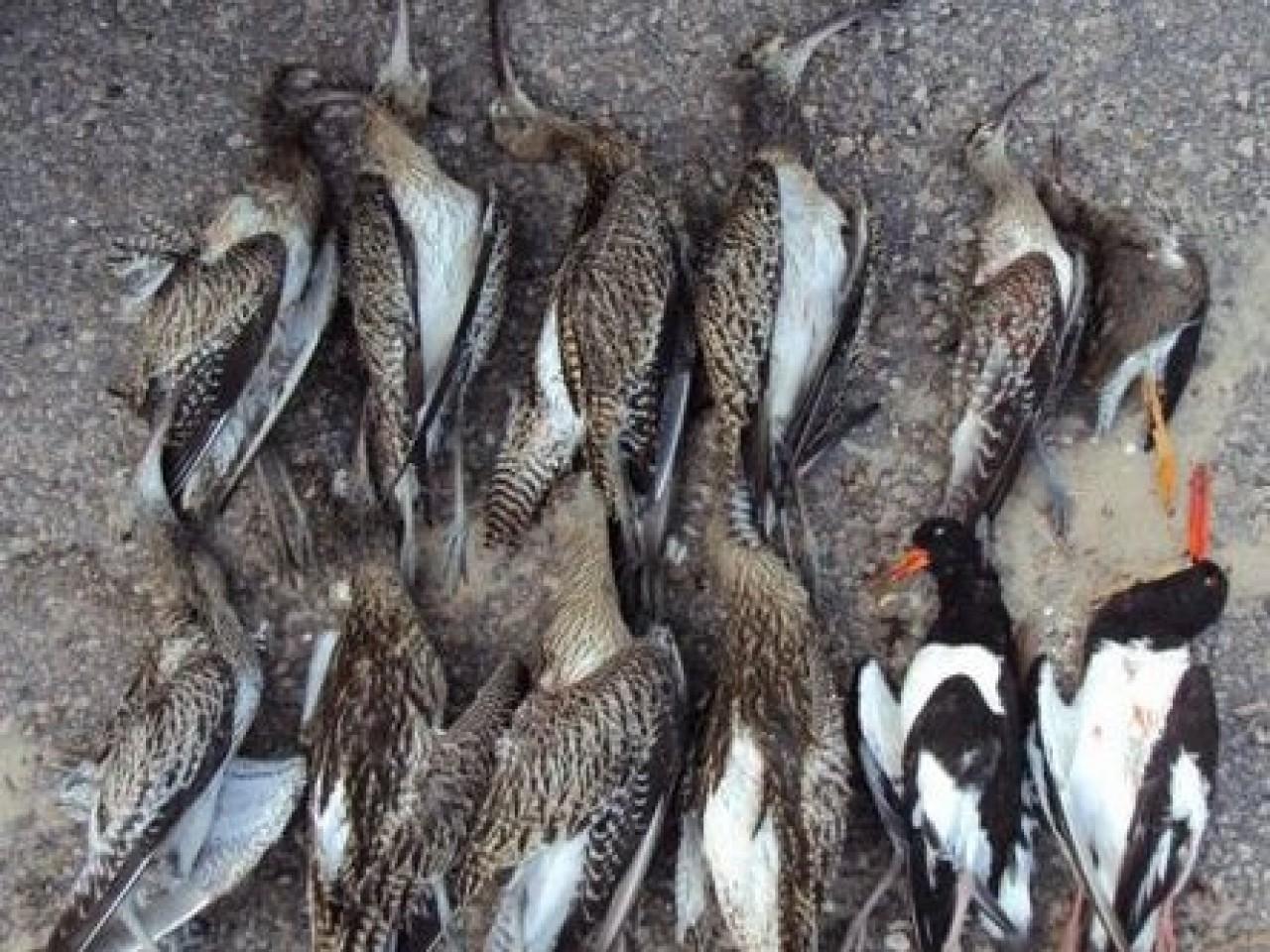 Petitie BFVW Tegen De Jacht Op Weidevogel In Europa