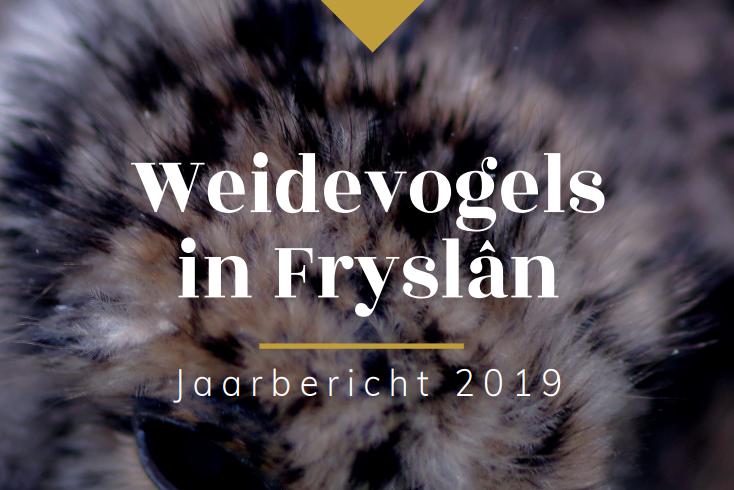Weidevogels In Friesland, Resultaten 2019